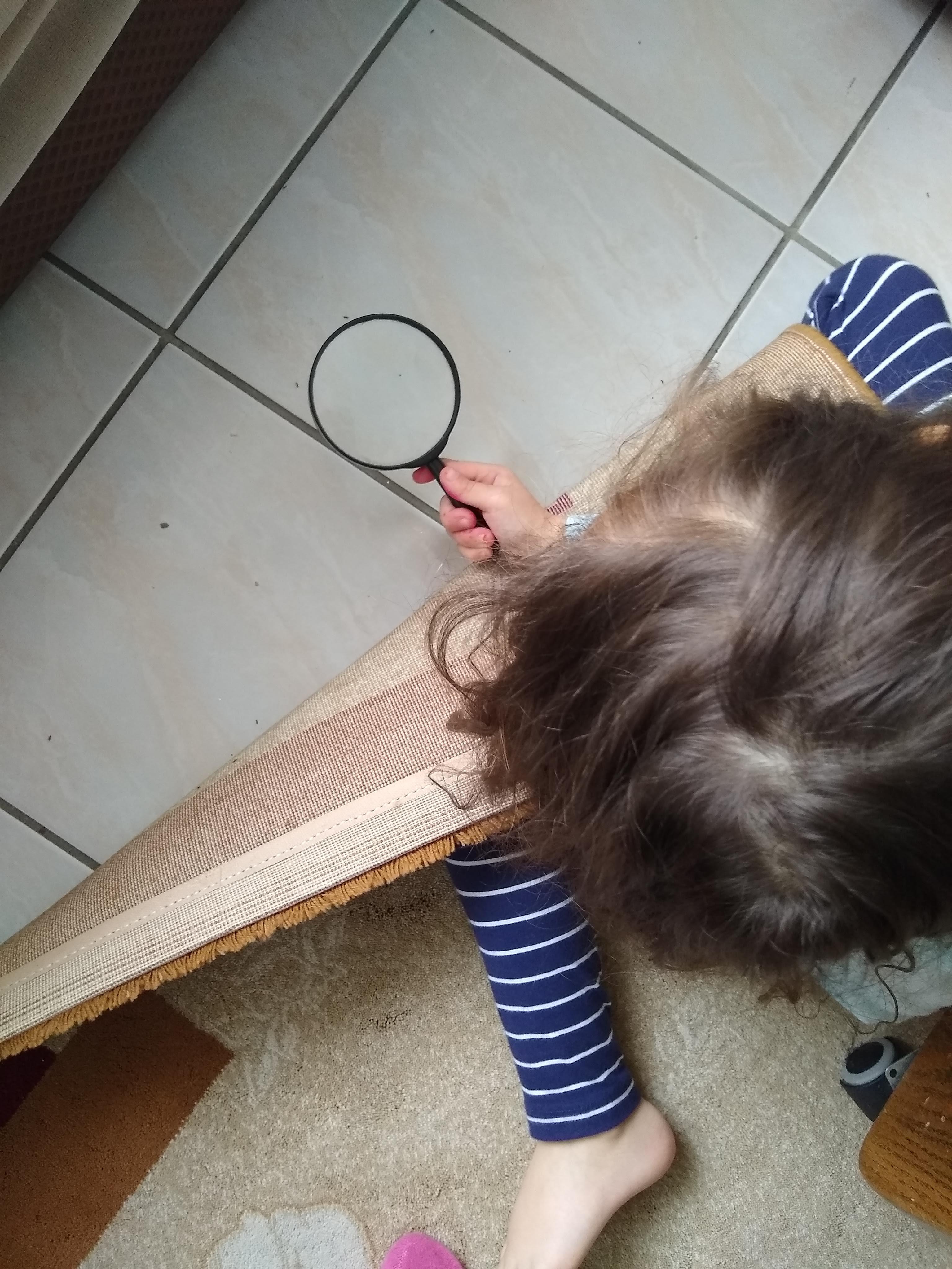 Spring Mini Unit : Ants homeschool